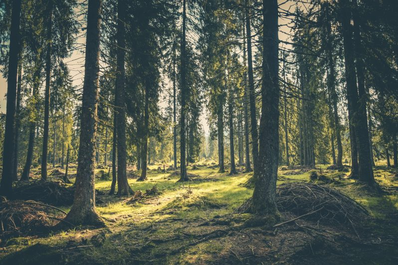 Evergreen Trees stay green all year-round and won't drop their leaves, despite the weather. Its a great representative of seasonal content, as they are always relevant.